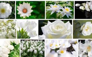 Белые цветы во сне сонник