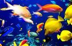 К чему снится красивая рыба сонник