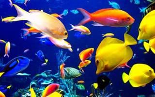 К чему снится мелкая рыба сонник