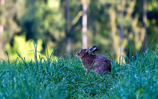 Маленькие зайчата сон сонник
