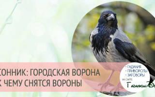 Сонник ворона