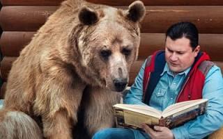 К чему снится медведь в доме сонник
