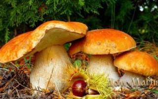 К чему снится большой гриб сонник