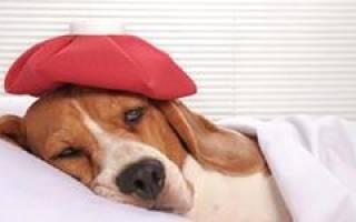 К чему снится больная собака сонник