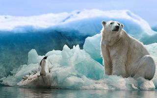 К чему снится белый медведь мужчине сонник