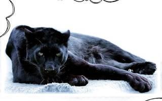 К чему снится пантера черная женщине сонник