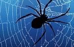 Видеть во сне паутину в доме сонник