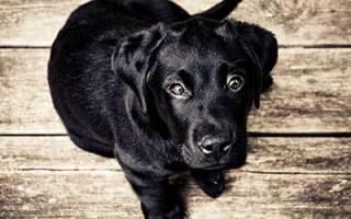 К чему снится убить собаку во сне сонник