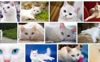 К чему снится белая кошка с котятами сонник