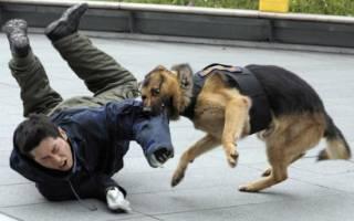 К чему снятся собаки мужчине которые нападают сонник