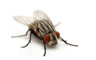 К чему снятся мухи в волосах сонник