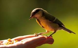 Сонник птичка маленькая в руках