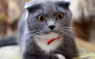 К чему снится много черных кошек сонник