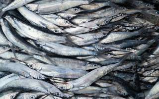 К чему снится много мелкой рыбы сонник