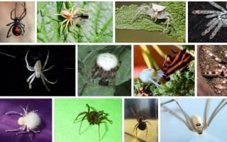 К чему снится белый паук женщине сонник