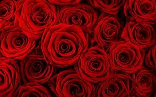 Видеть во сне розы сонник