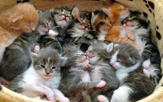 Сонник много маленьких котят