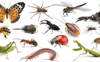 К чему снится много насекомых сонник