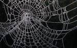 К чему снится паук большой с паутиной сонник