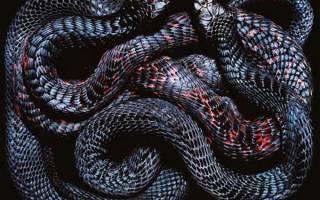 К чему снятся маленькие черные змеи сонник