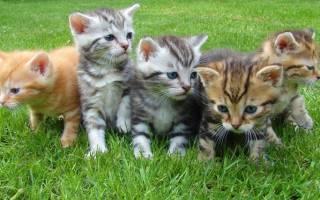 К чему снятся котята много маленьких сонник