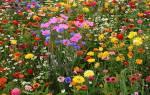Видеть много полевых цветов во сне сонник