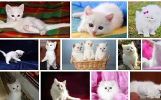 К чему снится белый котенок женщине сонник