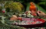 Видеть во сне много птиц сонник