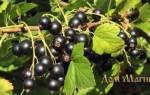 К чему снится рвать ягоды черной смородины сонник