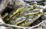 К чему снится змея женщине замужней сонник