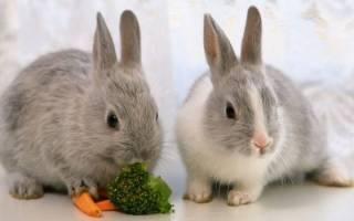 К чему снится большой кролик сонник
