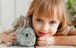 Видеть во сне много кроликов сонник