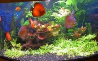 Сон рыбки в аквариуме много сонник