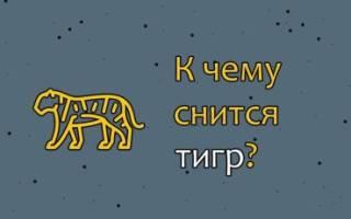 К чему снится тигр сонник