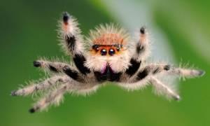 К чему снится паук большой коричневый сонник