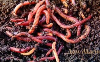 Сонник толкование черви