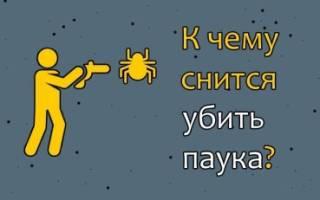 Сонник убить паука во сне