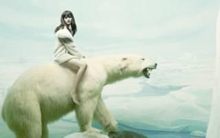 Сонник белый медведь нападает