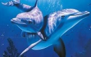 Видеть во сне дельфинов в воде сонник
