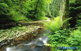 Сонник ручей с чистой водой