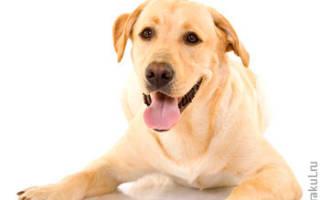 К чему снится мыть собаку сонник