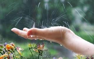 Дождевая вода сонник