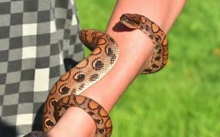 Ловить змей во сне сонник