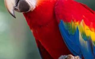 Видеть во сне попугая сонник