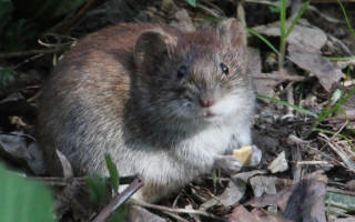 Видеть во сне мышей что означает сонник