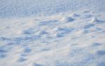 Сон снег белый сонник