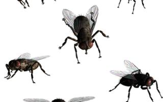 Видеть во сне много мух сонник