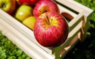 К чему снится много яблок сонник
