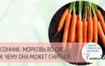 Видеть во сне много моркови сонник