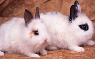 Видеть во сне кроликов маленьких сонник